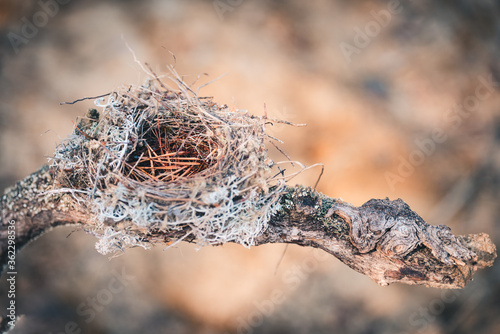 Fotografie, Obraz Twisted, disturbed nest made by birds from grass, twigs and pine needles to snake in the forest