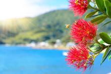Honey Bees Over Pohutukawa Red...