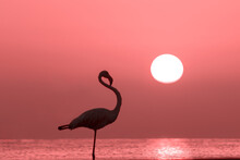 A Beautiful Lonely Flamingo Stands In A Lagoon Against A Background Of Golden Sunset And Bright Big Sun