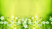 Small White Flowers On A Yellow Green Background
