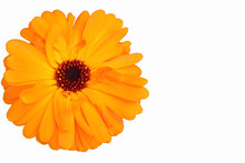 Marigold Flower Head, Calendul...