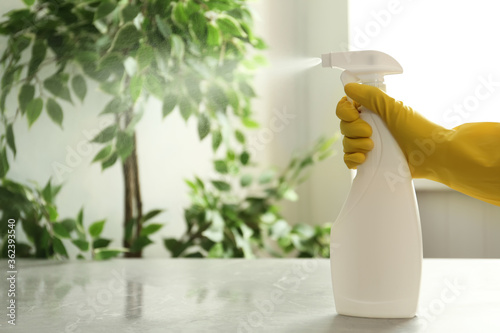 Fototapeta Person in gloves spraying detergent at table indoors, closeup. Space for text obraz