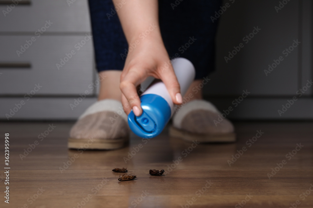 Woman spraying insecticide onto cockroaches, closeup. Pest control