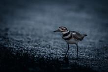 Closeup Of A Bird In Nature