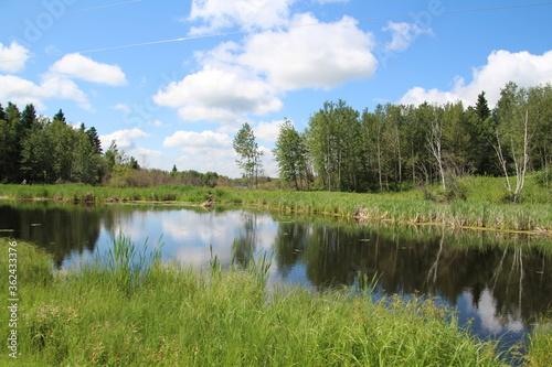 Fototapeta Summer On The Wetland, Elk Island National Park, Alberta obraz na płótnie
