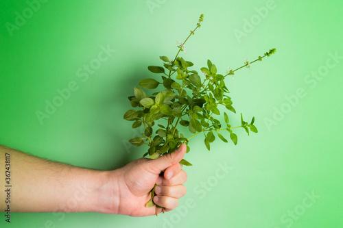 Photo Homem branco segurando uma muda de manjericão sobre o fundo verde