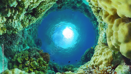 Fotografie, Tablou Underwater fish reef marine