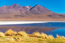 Canapa Lagoon With Flamingos A...