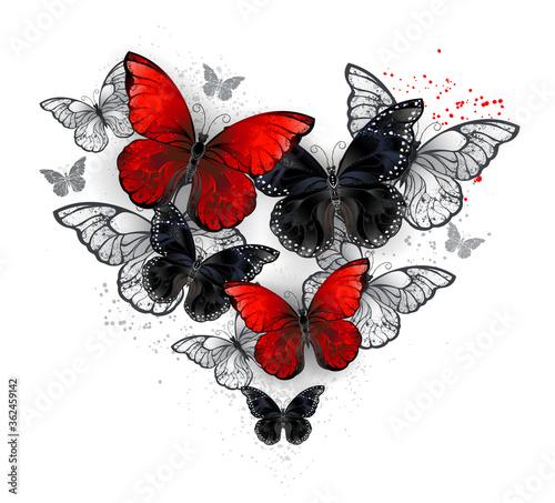 Fototapeta Realistic black and red morpho