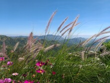 Poaceae Or Gramineae Are The W...