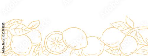 背景やバナーに使える、レモンのスケッチ風イラスト。ベクター画像。