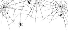 Halloween Spiderweb Border Wit...