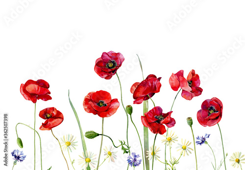 Watercolor background of wild flowers and poppies on a white background.For greetings, invitations, weddings, anniversaries and birthday