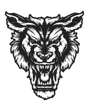 Wolf Face Vector Illustration....