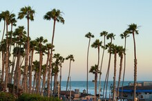 Palm Trees On The Beach In San Clemente During Sunset