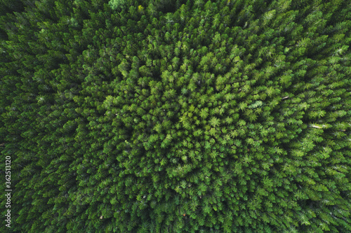 Aerial view coniferous forest trees drone landscape flying above woods scandinavian nature top down scenery