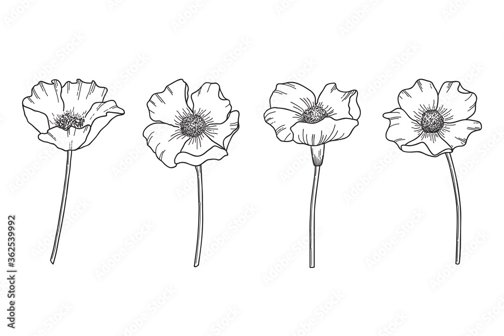 Fototapeta Set of hand drawn wildflowers. Flower heads, stems and hatching saved as separate forms in vector