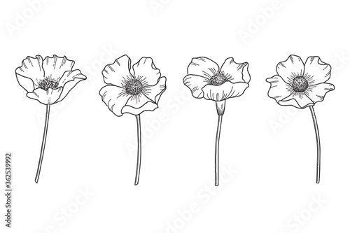 Obraz Set of hand drawn wildflowers. Flower heads, stems and hatching saved as separate forms in vector - fototapety do salonu
