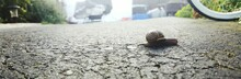 Panoramic View Of Snail On Foot Path