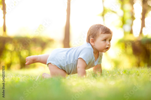 Fotografiet Cute baby boy 10 months in blue bodysuit learns to crawl on the grass in summer