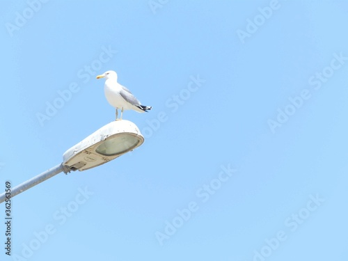 Photo Low Angle View Of Seagull Perching On Clear Blue Sky