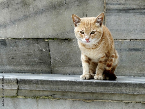 Portrait Of Cat Sitting On Retaining Wall Wallpaper Mural