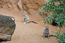 Rodents Sitting On Rock