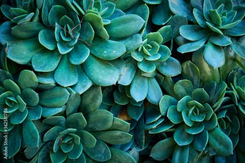 Fotografie, Obraz Full Frame Shot Of Succulent Plantl