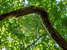 A Large Spider's Web In The Woods
