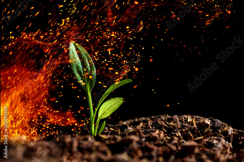 Photo A young tree in flames of fire