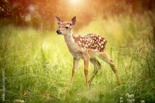 Photo Postcard baby deer Bambi in the grass in summer on a Sunny day