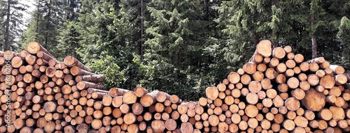 Foto Stack Of Logs In Forest