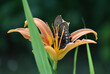 canvas print picture Close-up Of Butterfly Pollinating On Plant