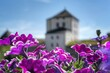 canvas print picture Close-up Of Pink Flowering Plant Against Building