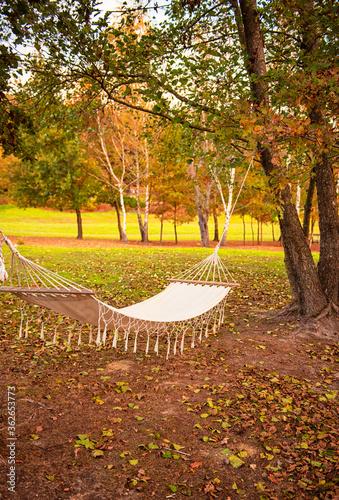 Fotografia, Obraz Hammock in the autumnal garden