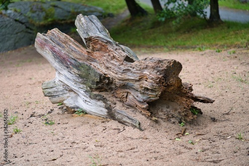 Valokuvatapetti 砂の上の古い流木