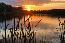 Cattail Silhouette On The Lake Shore At Sunset In Summer