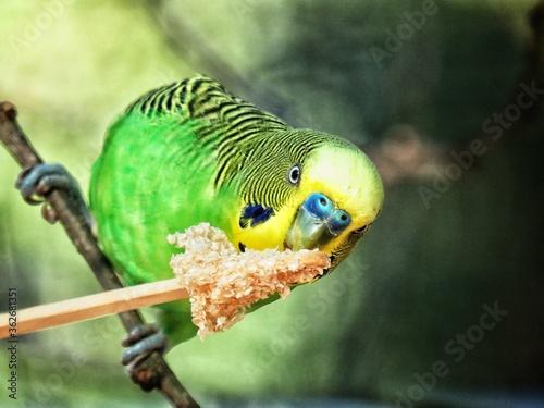 Close-up Of Parakeet Perching On Branch Fototapet