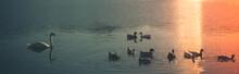 Ducks Swimming In Lake During Sunset