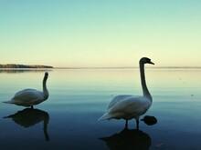 Swan In Lake Against Sky