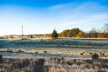 View Sheep  In Field On A Frosty Morning