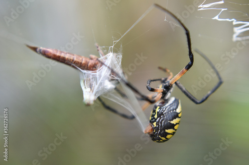 Obraz na plátně Close-up Of Spider On Web