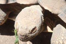 Close Up Tortoise Head