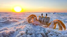 Early Morning Ghost Crab On Ha...
