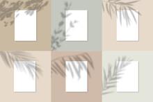 Shadow Overlay Plant Vector Mo...
