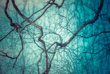 Abstract Of Twisted Bare Tree ...