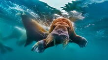 Underwater Walrus Swimming Art...