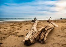 Panoramic View Of Driftwood On...