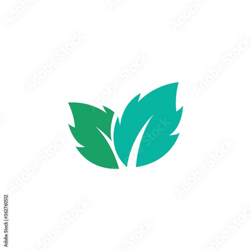 Obraz Mint leaves flat vector color icon template - fototapety do salonu
