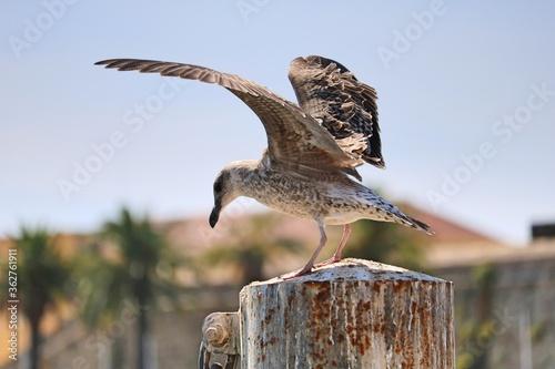 View Of Seagull Flying Against Sky Fototapete
